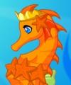 Elegant Seahorse
