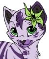 Kitten Creator 1